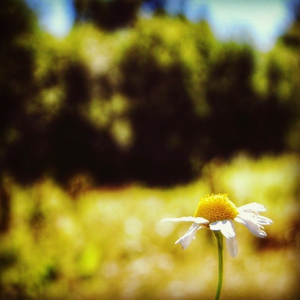 """Stand alone"" #floweroftheday #nature"