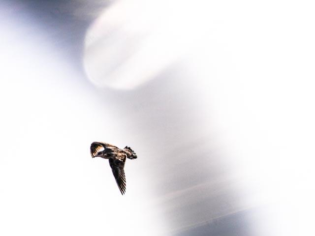 fågeln.foto: BelleBlue©Photo 2013
