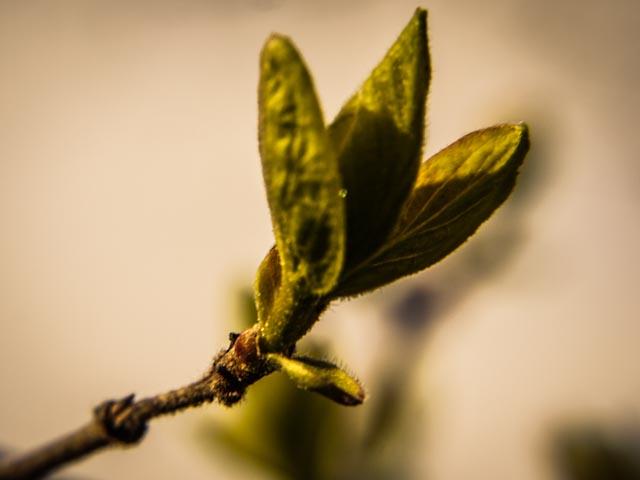 skott.foto: BelleBlue©Photo