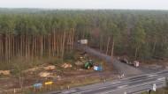 In Grünheide bei Berlin werden Bäume gefällt. Auf dem Gelände soll ein Tesla-Werk entstehen.