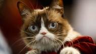 """Nicht mehr mürrisch: Die als """"Grumpy Cat"""" berühmt gewordene Katze, die eigentlich """"Tardar Sauce"""" heißt, ist gestorben."""