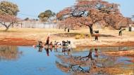Die Hoffnung auf schnelles Geld gefährdet das kostbare Ökosystem am afrikanischen Okavango-Delta.