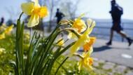 Frühlingswetter in Heidelberg: Ab Sonntag soll es allerdings vielerorts kälter werden und sogar schneien.