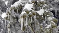 Schwarzwald: Alles voller Schnee