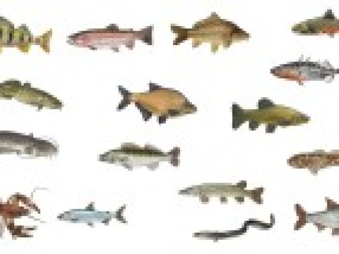 Sag mir, wo die Fische  sind
