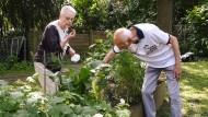 Kräuterbeet: Ehrenamtliche Gärtner kümmern sich um Pflanzen.
