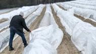 Wachstumstreiber: Folien wie diese helfen Bauern enorm etwa beim Spargelanbau, rufen aber Naturschützer auf den Plan