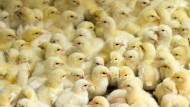 Tierschutz hat seinen Preis – die meisten Kunden sind nicht bereit, ihn zu zahlen.