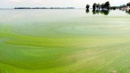Algenblüte in der Dnepr – ein Phänomen der Überdüngung, das auch global für Einbußen sorgt.