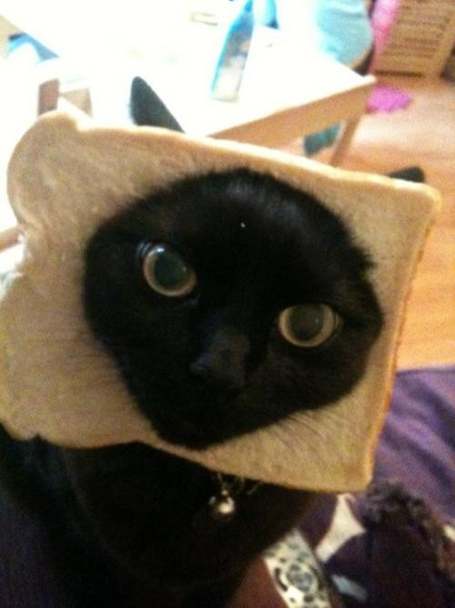 Cat Friday Breaded Cats Edition