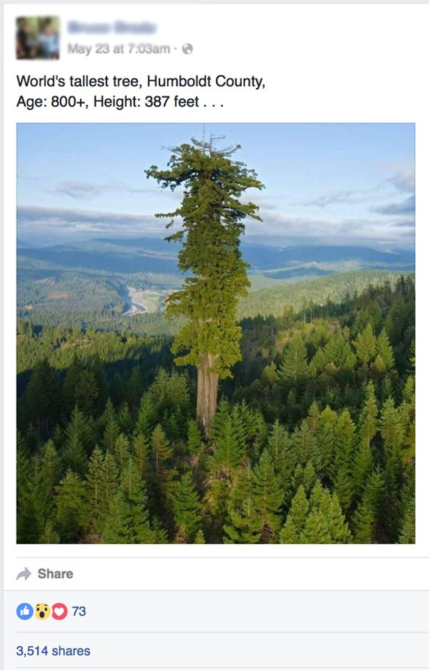 Buzzkill Thats Not the Worlds Tallest Tree  News Blog