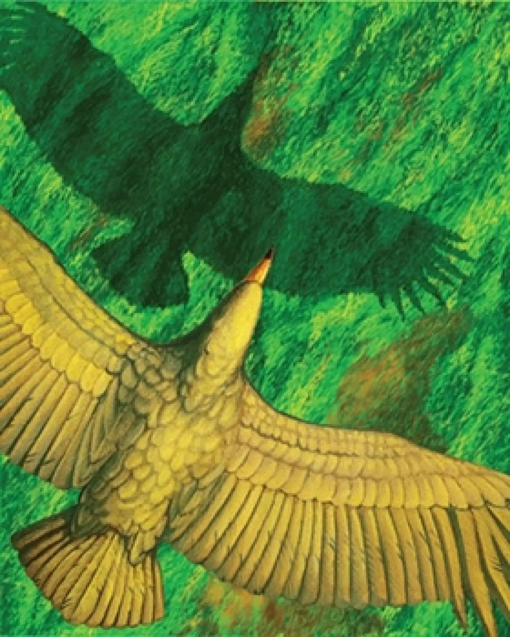 Oiseau Qui Vole Le Plus Haut : oiseau, Argentavis, Magnificens, Oiseau, Temps, Volait, Comme, Planeur, Devoir