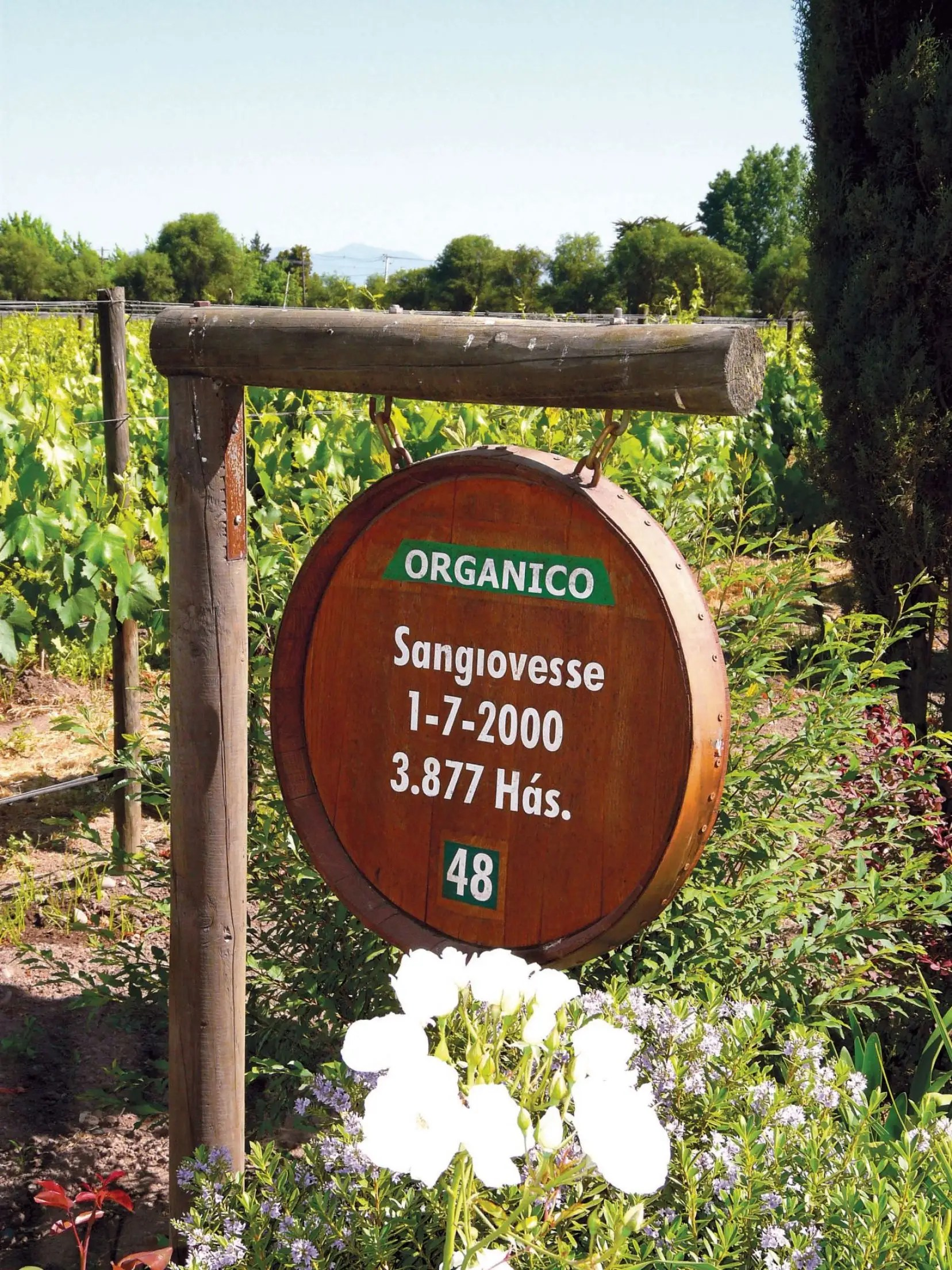 Bouilles De Vignerons Mots Croisés : bouilles, vignerons, croisés, Calme, Naturel!, Devoir