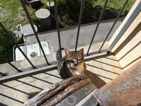 maca koja bi da se češka