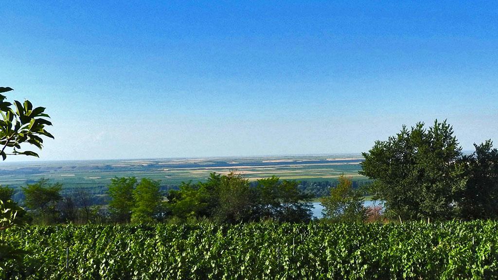 Atelje vina Šapat – vinarija sa pogledom na Dunav