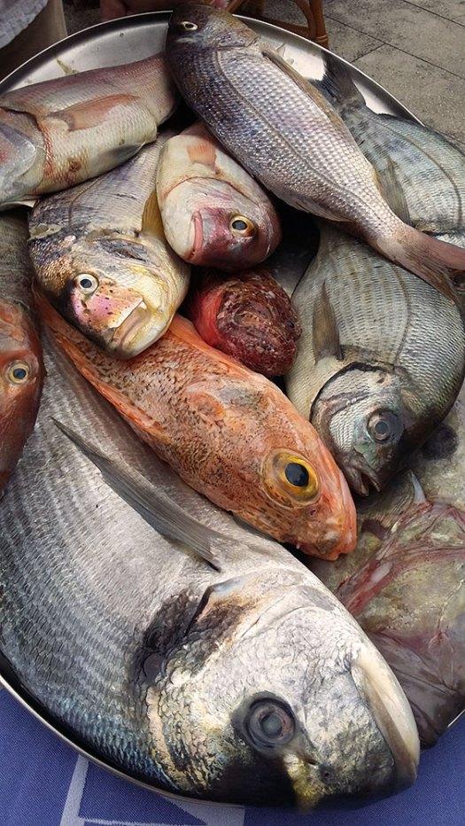 biranje sveže ribe
