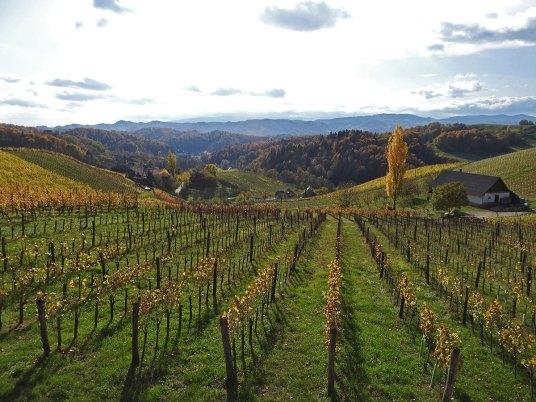 pogled iz vinarije