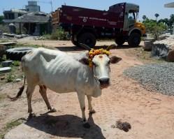 Mamallapuram-1273