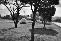 Pez 2004