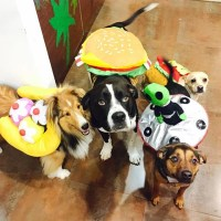 Miley Cyrus's Dogs in Halloween Costumes | POPSUGAR Pets