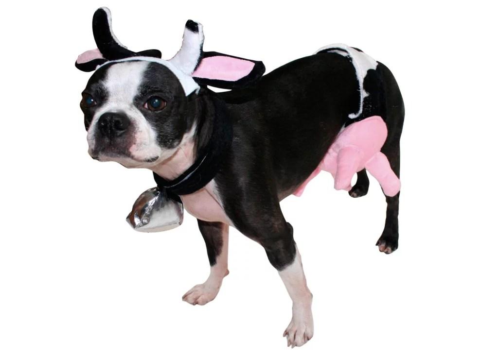 Cheap Dog Costume & Batman Dog Costume Sc 1 St Cheap