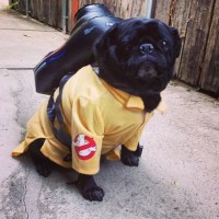 Ghost Pugster | Creative Dog Costumes | POPSUGAR Tech Photo 5