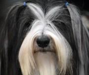 dog hairstyles popsugar