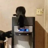 A Man Caught His Cats Discovering the Ice Machine, and Oh My Word