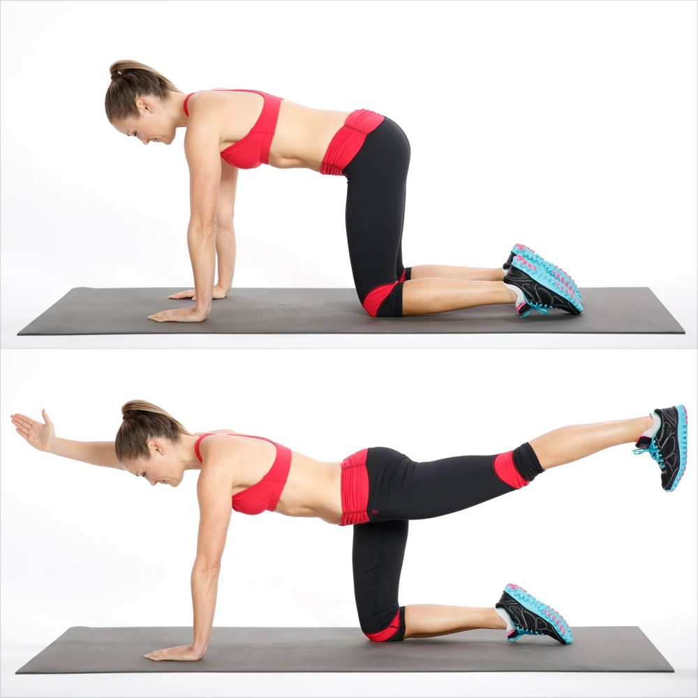 medium resolution of how to do bird dog exercise for your back