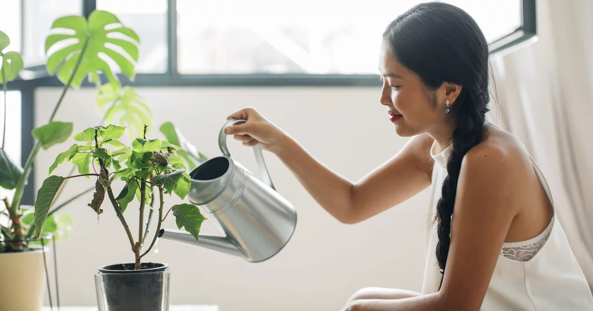Beat the Heat This Summer With These 5 Humidity-Reducing House Plants
