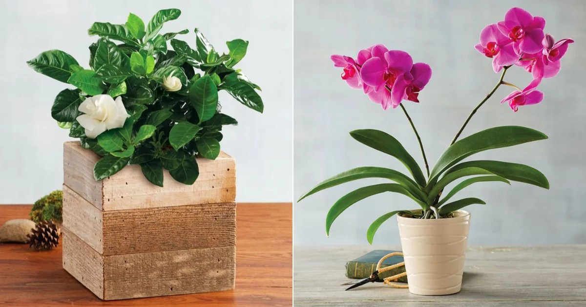 Blooms For Beginners: These Houseplants Basically Take Care of Themselves