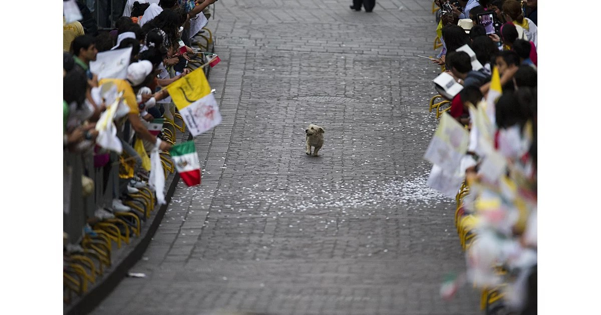 This Dog That Thinks The Parade Is All For Him Happy