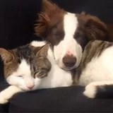 These Movies of Cats and Canine Hanging Out Show You Do not Should Be the Identical Species to Be BFFs