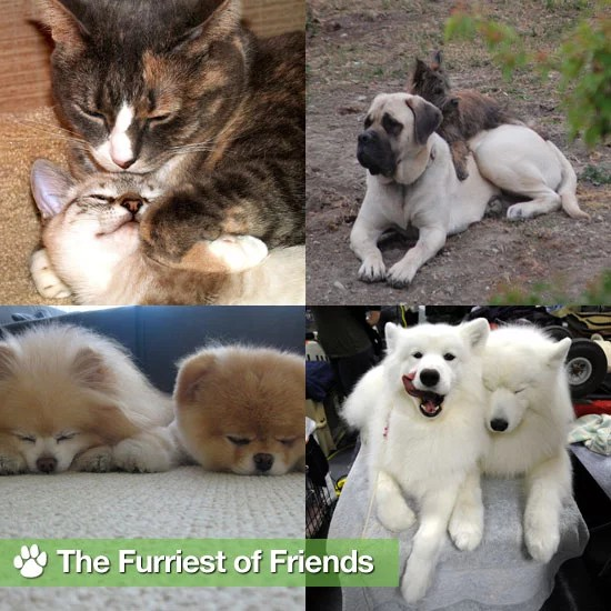 Pictures Of Cute Dogs And Cats Popsugar Pets