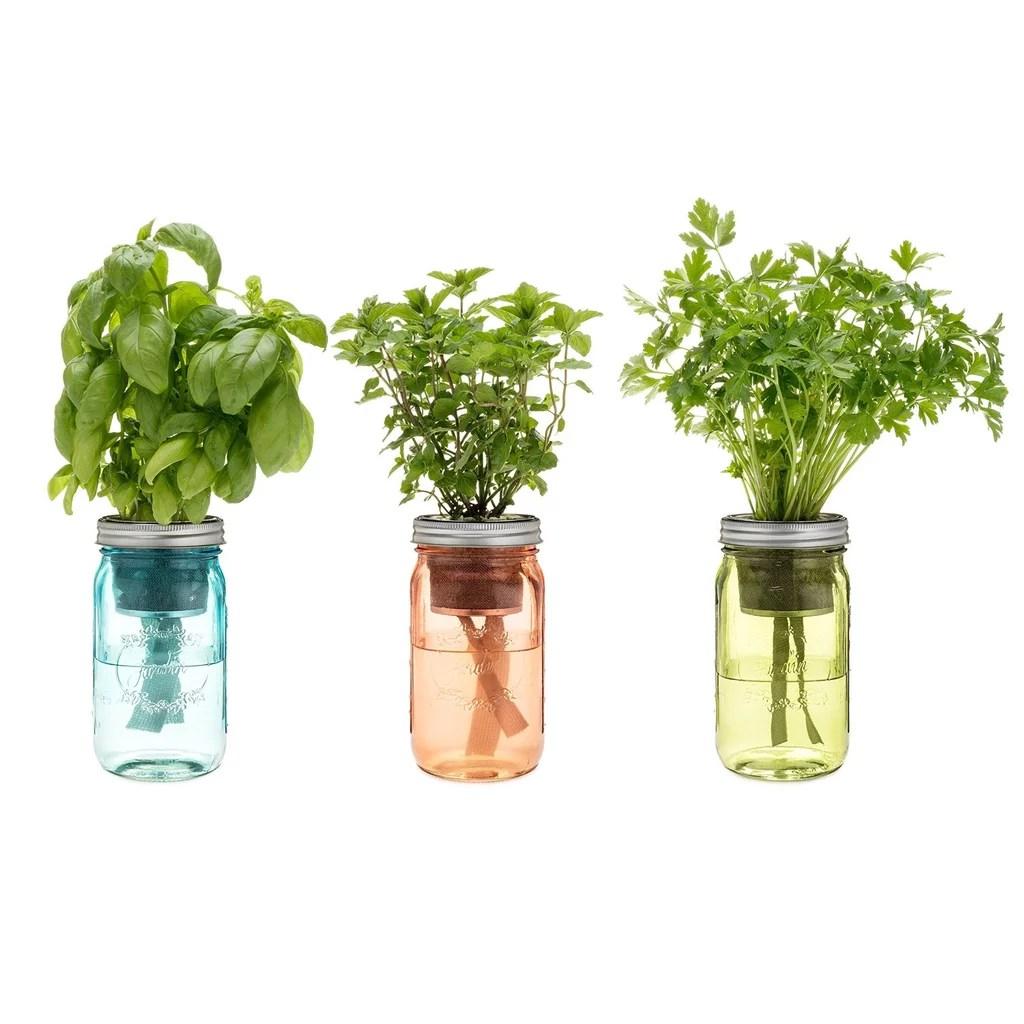 kitchen herb kit cupboard under 75 modern sprout oprah s favorite things