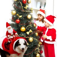 Santa Dog Costume | POPSUGAR Family