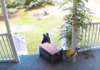 Please Watch as This Giant Bear Gracefully Steals a Chewy Box Off Someones Front Porch