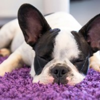 Best Vacuums For Pet Hair on Carpet and Hardwood ...