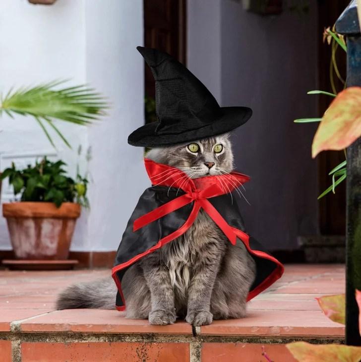 Best Cat Costumes For Halloween 2020 Popsugar Pets