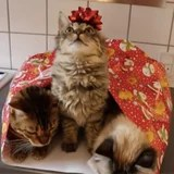 These Cats Acquired Wrapped Up For Christmas, and I am Formally within the Vacation Spirit