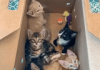 This Woman Runs a Kitten Airbnb, and Her Photos Are a Cat-Lovers Heaven