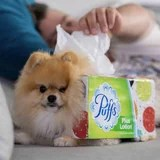 A Man Dressed His Pomeranian Up as a Field of Tissues For Halloween, and It is Good