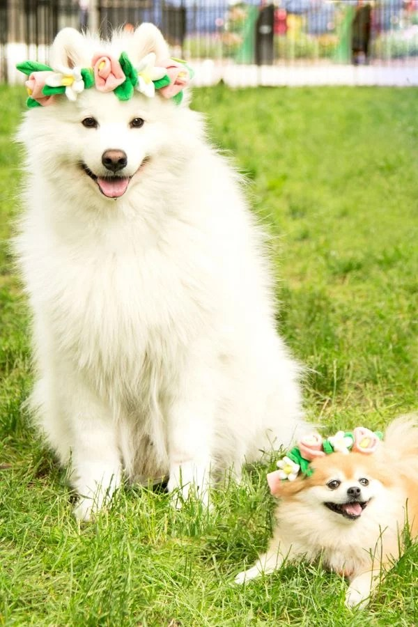 cute dog flower crown