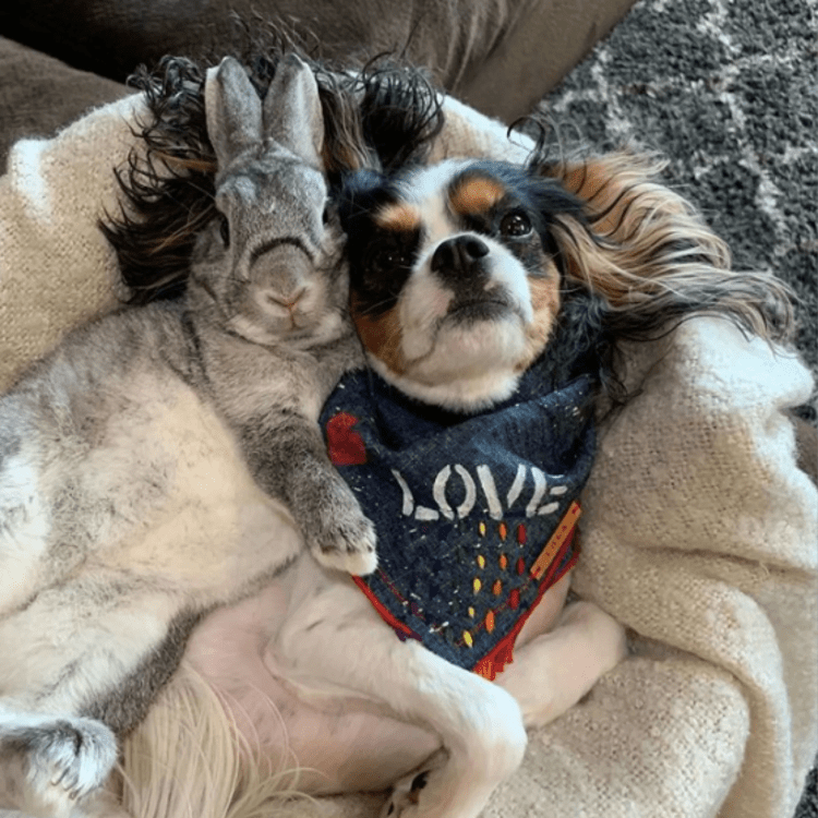Photos and Videos of Dog and Bunny | POPSUGAR Pets