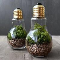 Cute Office Plants | POPSUGAR Career and Finance