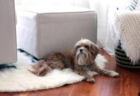 Carpet Pet Stains | How to Clean Everything at Home ...