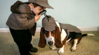 Adorable Halloween costume ideas for kid-and-pet duos ...