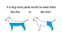 How would a dog wear pants? The Internet finally has an ...