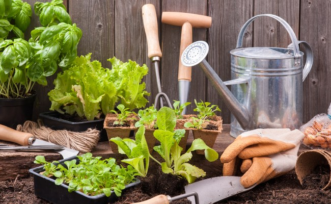 Gardening Tips 3 Things To Know When Planting Today
