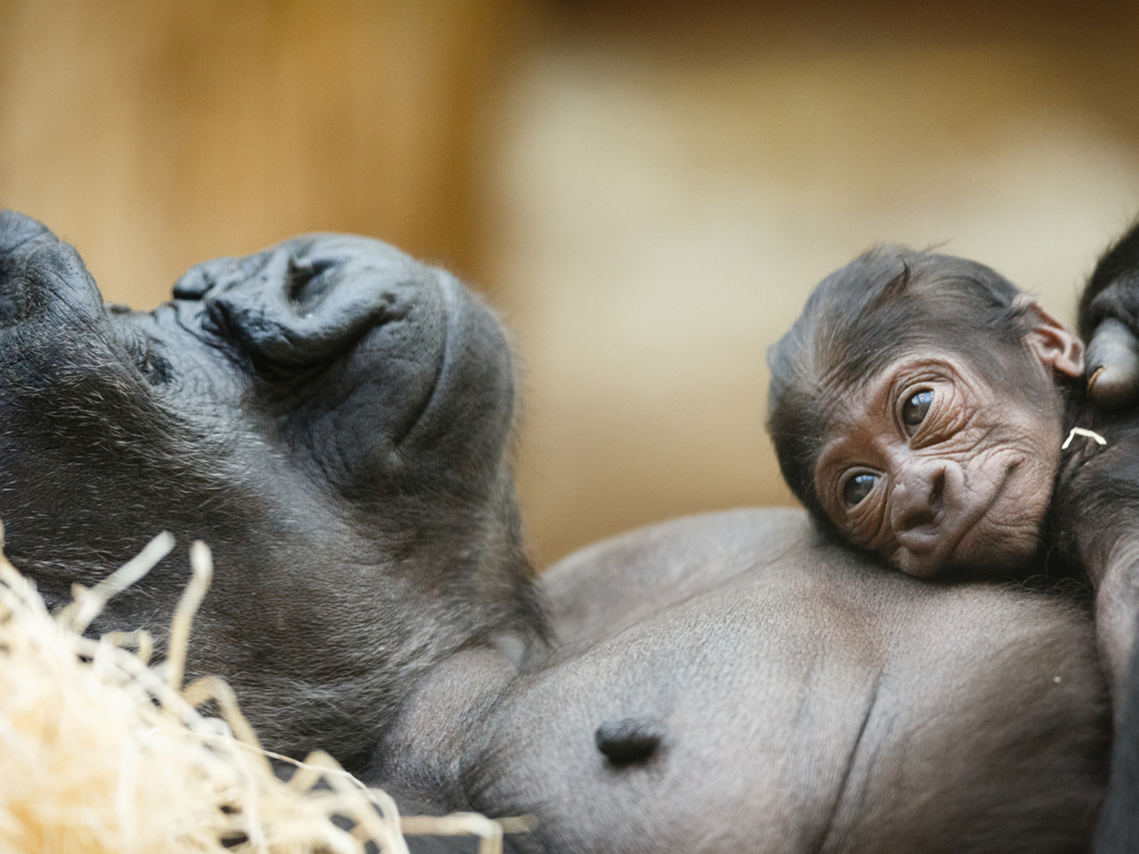 23 Heart Warming Photos Of Animal Moms And Their Babies